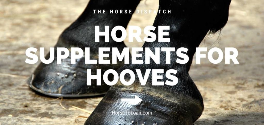 Horse Supplements For Hooves horse hoof biotin