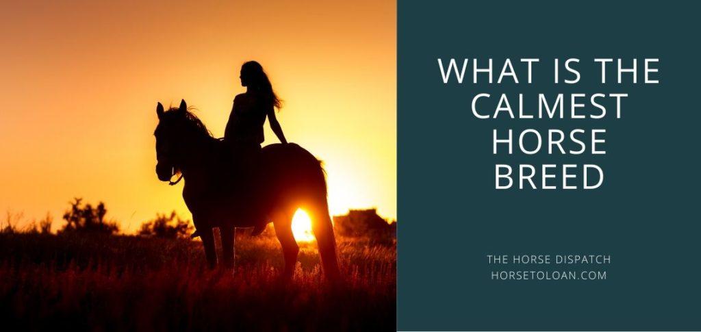 calmest horse breed