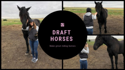 can you ride a draft horse