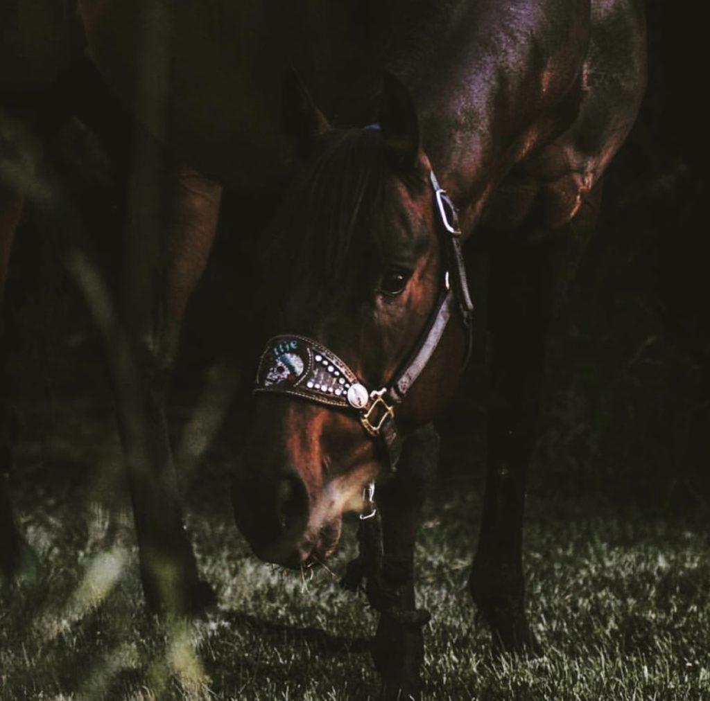 The Horse Dispatch Allie
