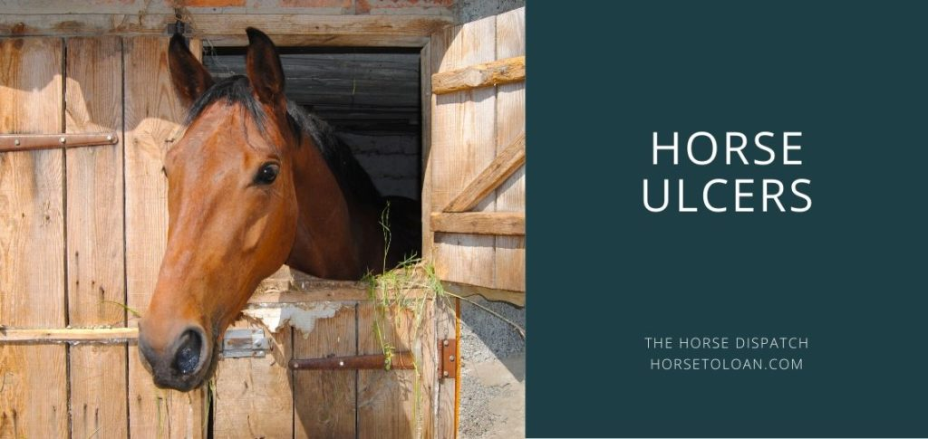 Horse Ulcers