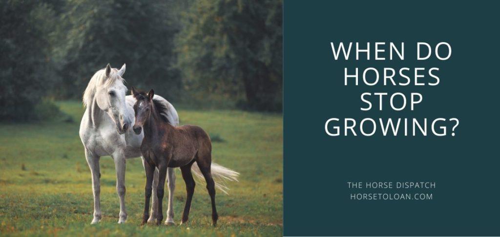 When do Horses Stop Growing