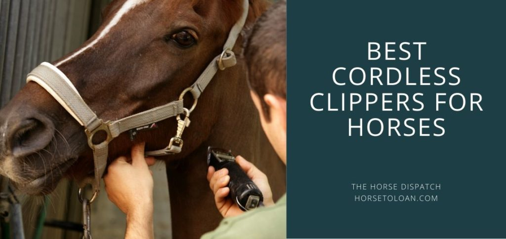 Best Cordless Horse Clippers (1)