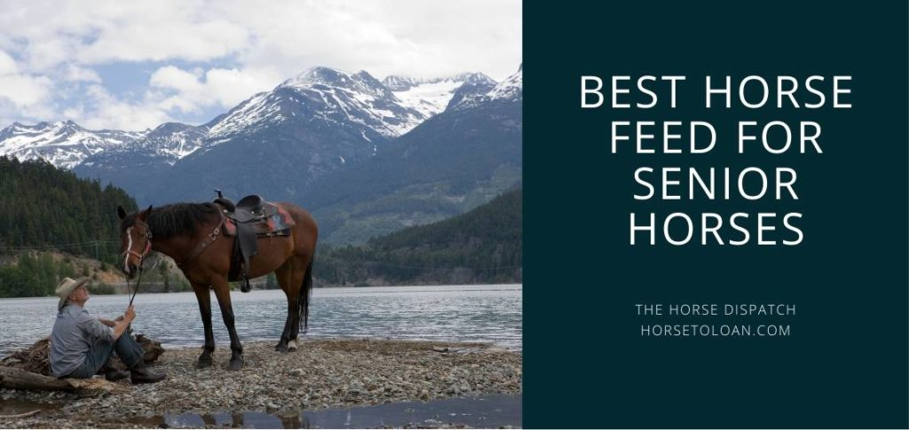 Best Horse Feed For Senior Horses