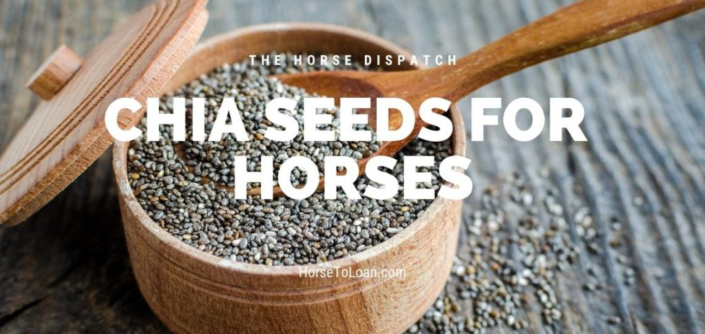 Chia Seeds For Horses