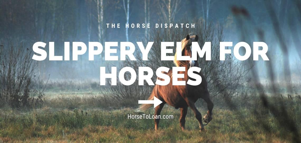 Slippery Elm for Horses