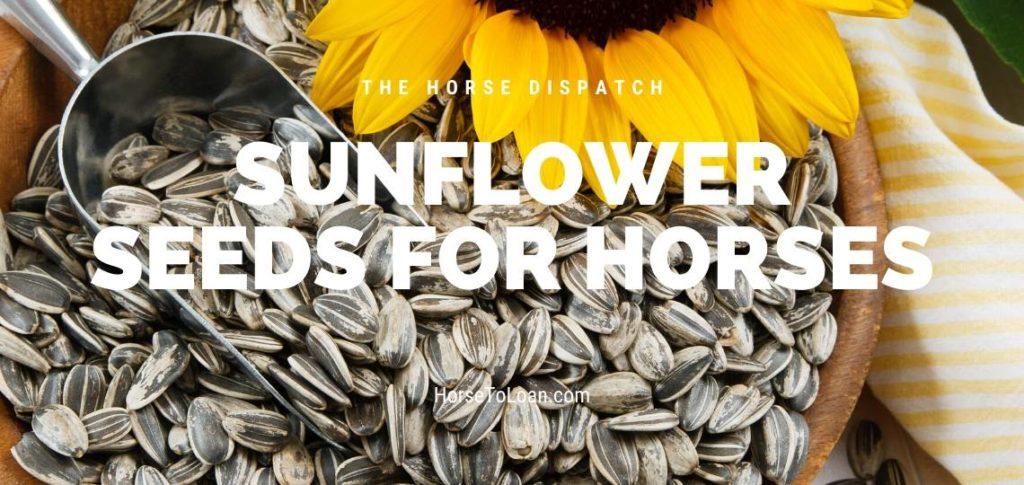 Sunflower Seeds for Horses