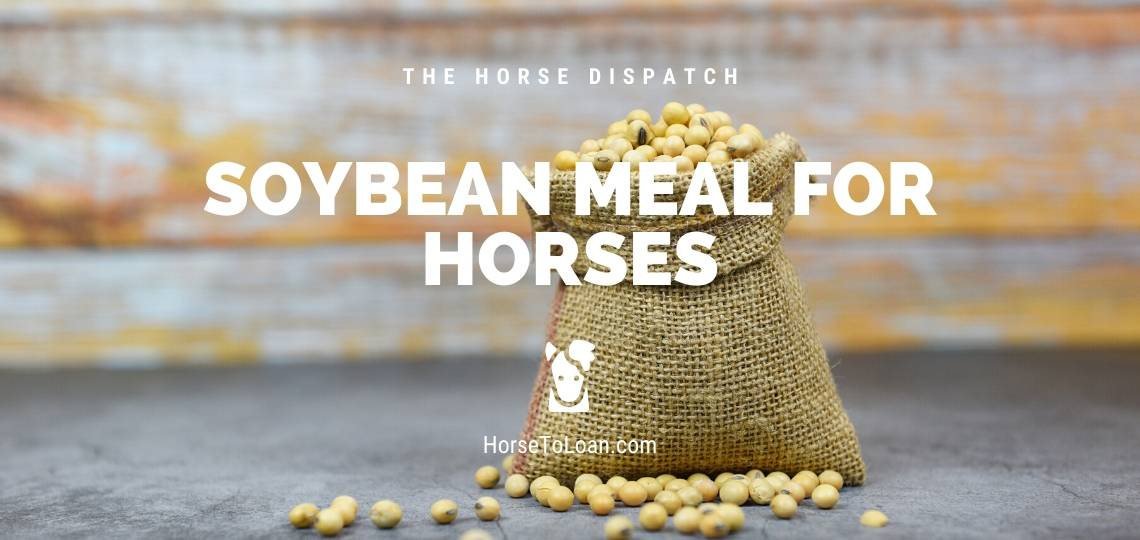 Soybean Meal for Horses