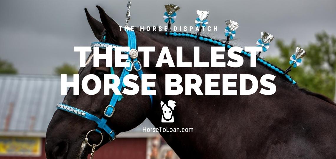 Tall horse breeds hero