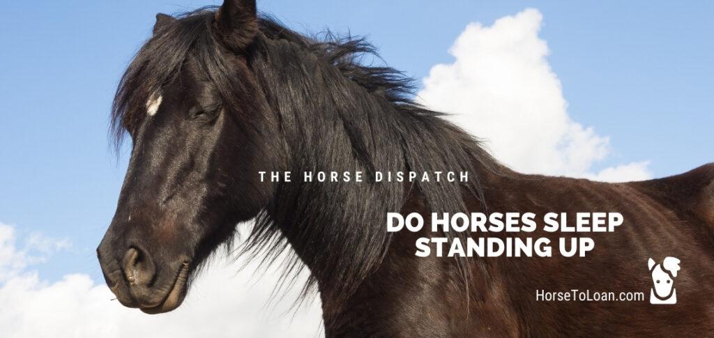 Do Horses Sleep Standing up
