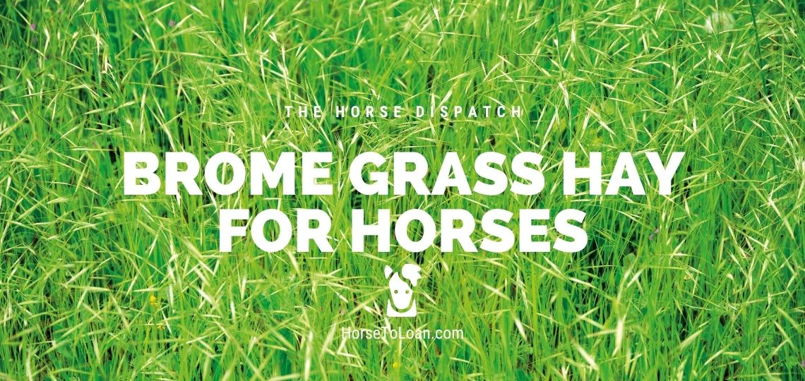 Brome Hay For Horses