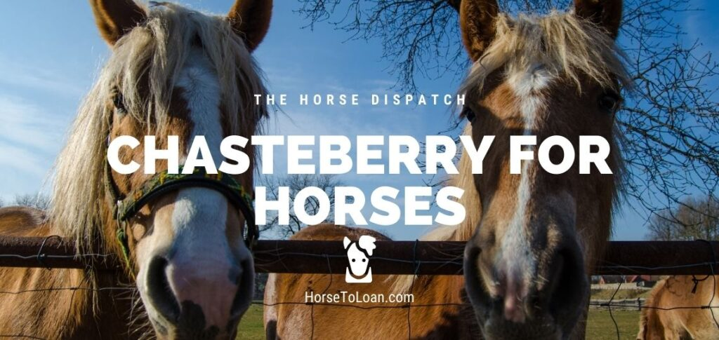 Chasteberry for Horses