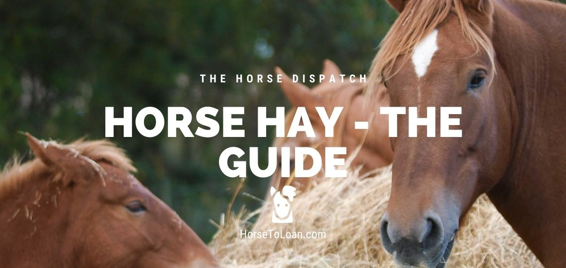 Horse Hay what is the best hay for horses