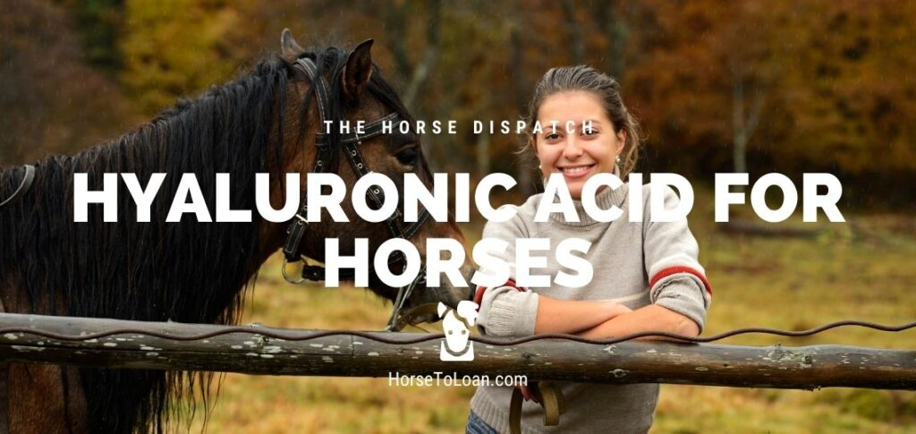 Hyaluronic Acid for Horses
