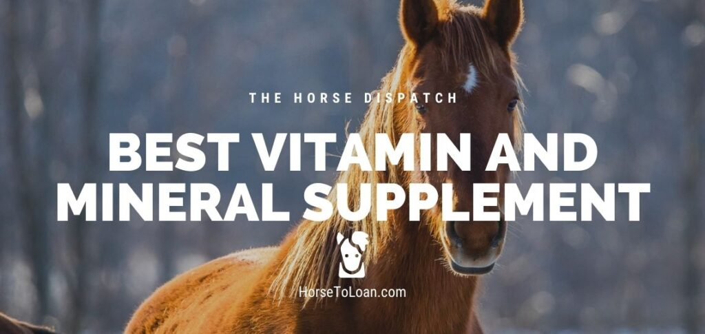 Best Horse Vitamin and Mineral Supplement