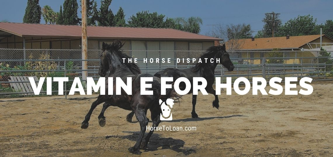 vitamin e for horses