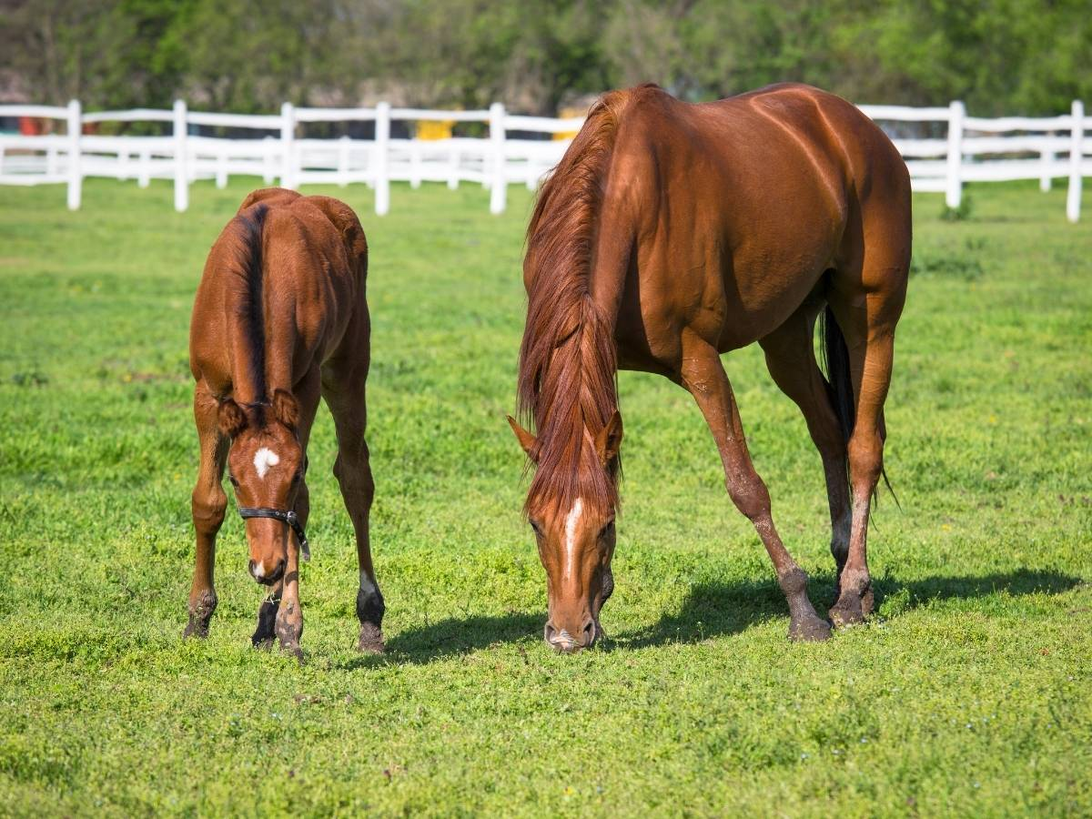 horse eating grass not meat
