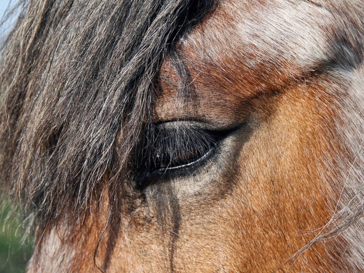 How Long do Horse Live